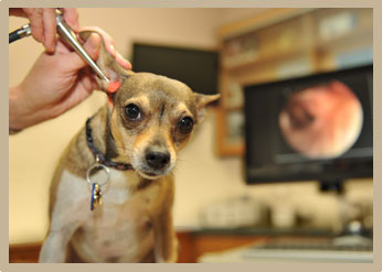 Chronic Ear Disease Treatment